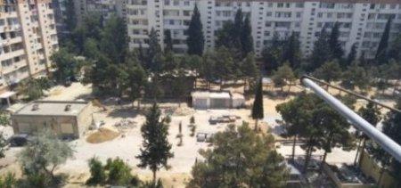 Xətai rayonunda ağacları kimlər və niyə kəsdi…